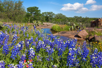 bluebonnet pictures,texas landscapes,texas bluebonnets,hill country bluebonnets,texas wildflowers images
