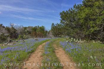 bluebonnets, trail, path, hill country, cacti, spring, afternoon