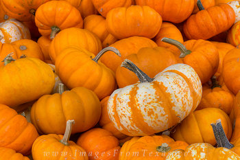 Hill Country Pumpkins 1
