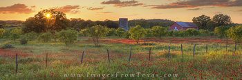 texas wildflowers,texas wildflower panorama,texas landscape,texas hill country,hill country wildflowers panorama,prints,wildflower photos