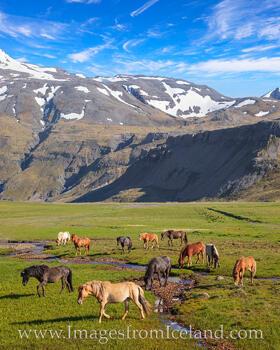 Icelandic Horses near Grundarfjörður 1