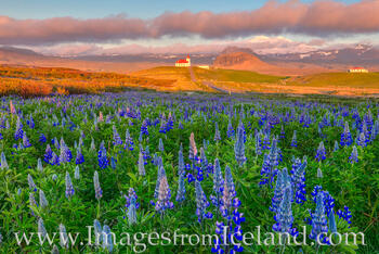 Ingjaldshólskirkja in Golden Light - West Iceland 1