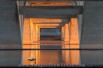 austin bridges,lamar bridge,austin sunrise colors,ladybird lake,town lake,austin prints,stock photography