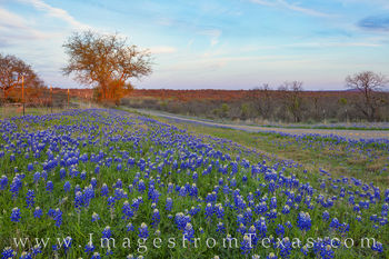 bluebonnets, evening, hill country, llano, mason, castell, farm to market, FM 152, sunset, hill country, texas hill country