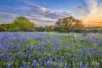 Late March Bluebonnet Sunset 331-3