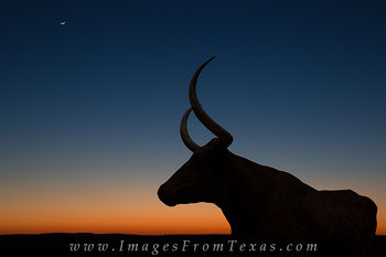 longhorns,longhorn images,texas hill country images,texas hill country,moonset