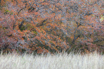 lost maples,lost maples state park,texas fall color,texas hill country