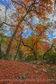 lost maples, red, leaves, maples, fall, autumn, prints, november, texas state parks
