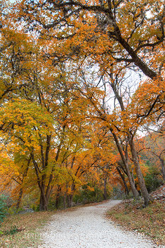 Lost Maples - A Walk on the East Trail 6