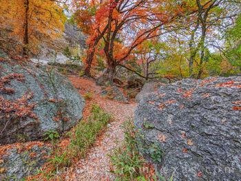 Maple Trail 1112-1