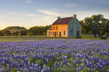 bluebonnets,texas hill country,marble falls,texas wildflower images,bluebonnet prints