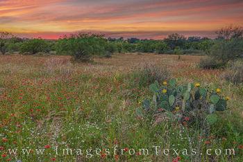 May Reds at Sunset 501-4