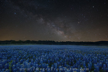 bluebonnets,texas bluebonnets,bluebonnet prints,texas hill country,milky way