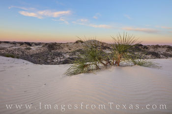 Monahans, sand dunes, sandhills, sand, west texas, sunset, evening, sunburst, yucca, shadows