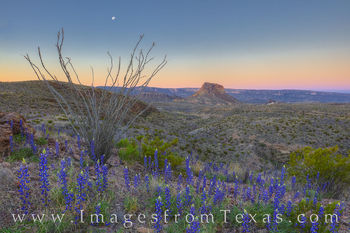 bluebonnets, big bend national park, cerro castellan, moon, moonset, chisos mountains, west river road, ross maxwell, west texas, sunrise
