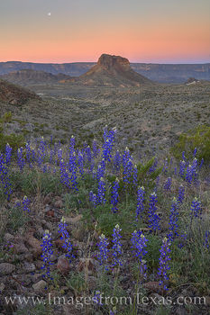 cerro castellan, big bend, big bend national park, moon, chihuahuan desert, sunrise, moonset, bluebonnets, wildflowers, texas bluebonnets, texas wildflowers, february, spring, bloom