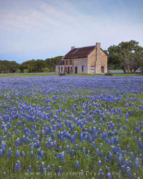 bluebonnet prints, bluebonnet photos, texas wildflower prints, texas wildflower photos, bluebonnet house, blue, texas hill country, hill country photos, texas icons, texas landmarks, marble falls