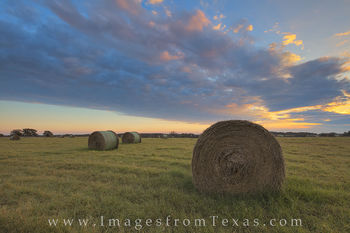 texas hay, hay field, texas hay field, texas landscape, texas farm, texas ranch, texas sunrise, texas harvest, texas, hay
