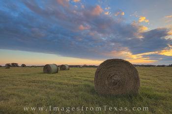 Morning Hay 1