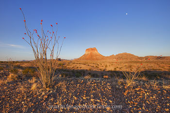 big bend national park,big bend images,chisos mountains,chihuahuan desert,ocotillo,big bend prints