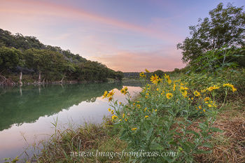texas wildlfowers,texas hill country,pedernales river,pedernales falls state park,texas sunrise,yellow flowers,wildflowers