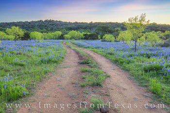 bluebonnets, wildflowers, sunset, hill country, evening, dirt road, peace
