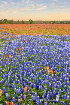 Orange and Blue near Whitehall, Texas