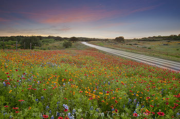texas wildflowers,indian paintbrush,firewheels,texas hill country,llano