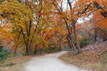 texas autumn colors,lost maples state park,texas hill country,texas landscapes