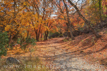 bigtooth maple, lost maples, fall, autumn, lost maples prints, hill country, hiking, walking, exploring, leaves