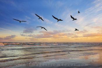Port Aransas Seagull Sunset 1