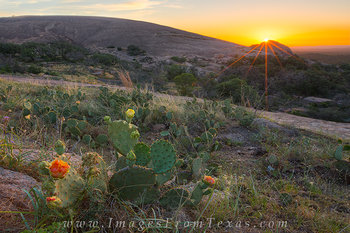 Prickly Pear Sunrise at Enchanted Rock