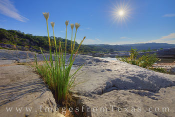 Rain Lilies in the Texas Hill Country 1