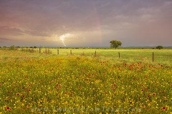 Rainbows and Lightening over Wildflowers