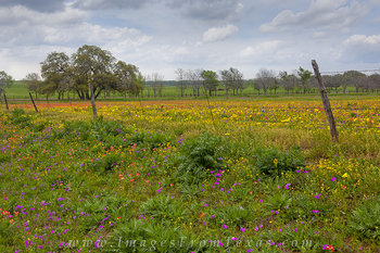 texas wildflowers,texas landscapes,new berlin,indian paintbrush