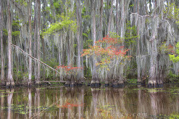 Reflections of Caddo Lake 1