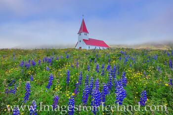Reyniskirkja Church and Lupine in Vik, Iceland 2