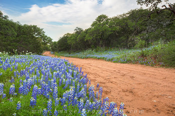 bluebonnets,texas hill country,country roads,texas wildflowers,texas spring,dirt roads,texas