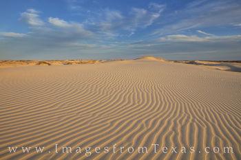 monahans, sandhills, sandhills state park, sand dunes, texas dunes, sand, texture, west texas, monahans sandhills state park, state parks, texas state parks, texs parks