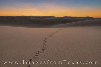 sand dunes, sandhills state park, sunrise, monahans, sand, west Texas, animal tracks