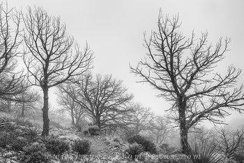 texas black and white,big bend images,big bend national park,black and white,emory peak trail,emory peak