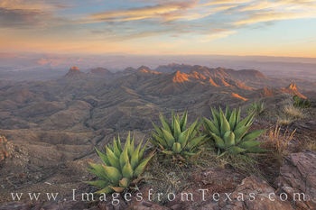 south rim, big bend, agave, sunset, hiking, texas landscape, big bend prints