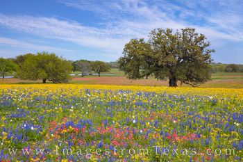 South Texas Wildflower Afternoon 317-1