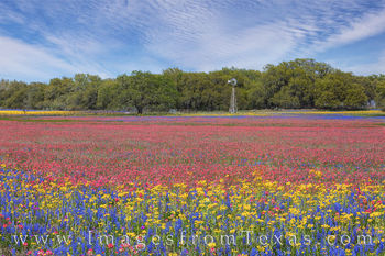 South Texas Wildflower Afternoon 317-4