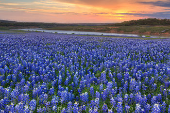 bluebonnet photos,wildflower images,texas landscapes,texas wildflowers,bluebonnet sunrise,texas prints,wildflower prints