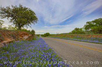 bluebonnets, hill country, roadside, country drives, wildflowers, spring, 1900