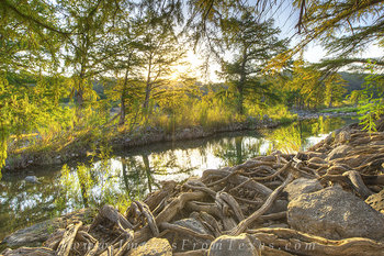 texas hill country,Pedernales Falls State Park,cypress