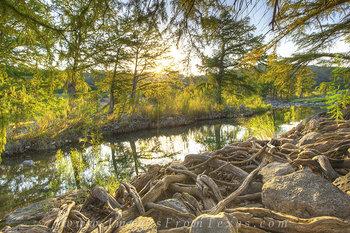 Pedernales Sunlight through Cypress