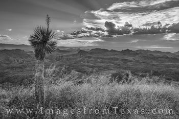 oso peak, big bend ranch, texas state parks, sunset, yucca, black and white