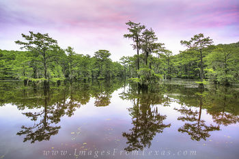 Sunrise at Caddo Lake State Park 1